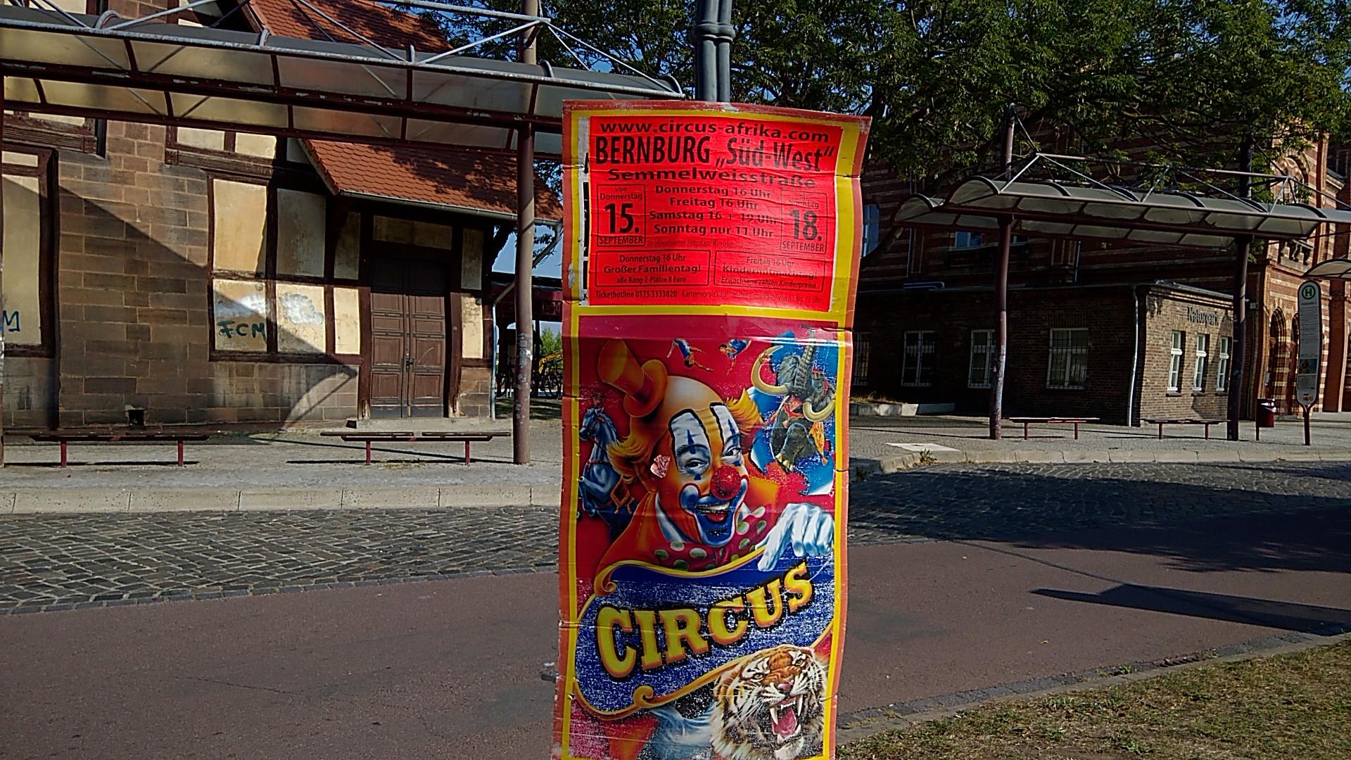 Elefanten brauchen keinen Circus