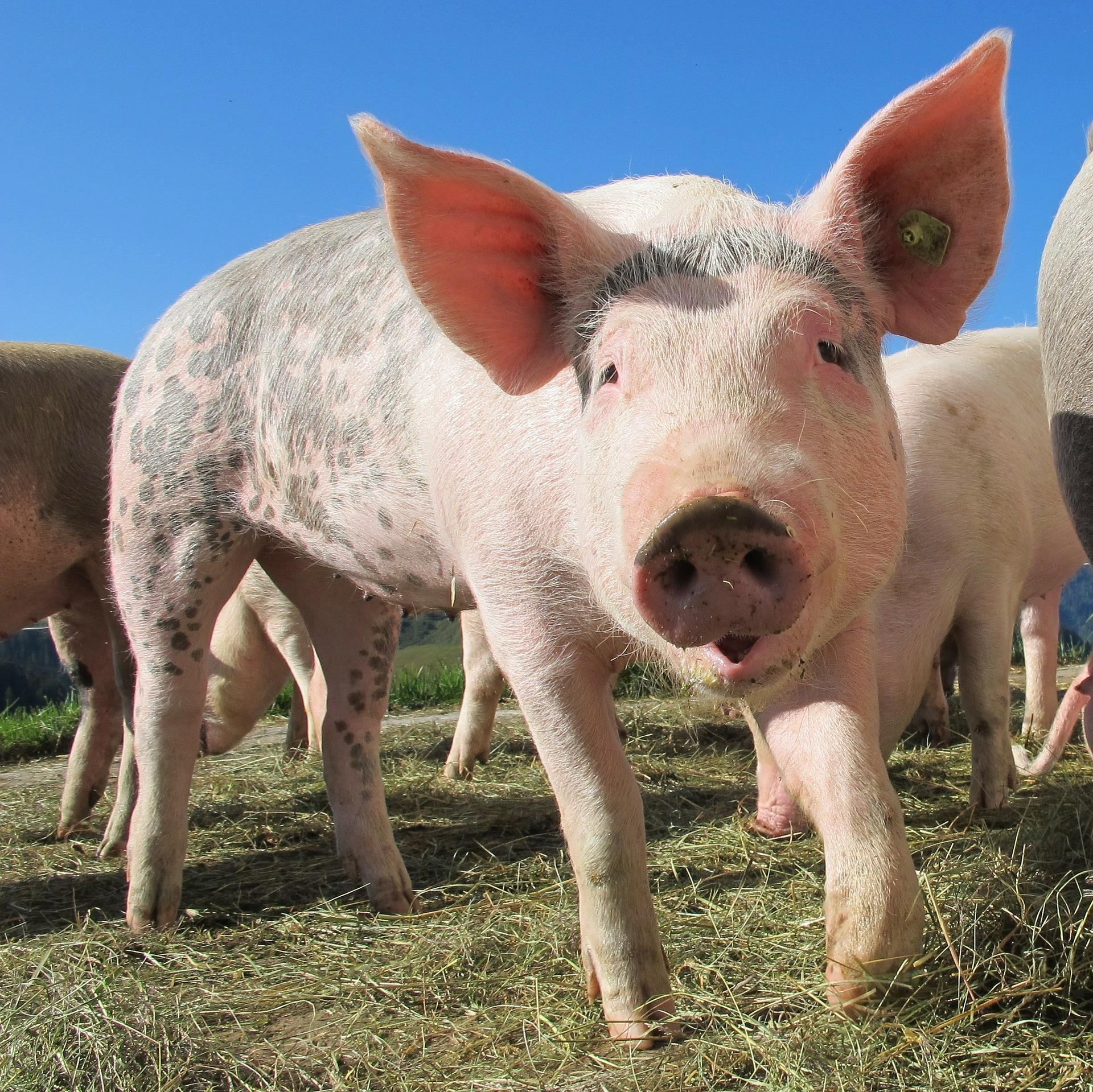 Tierwohl: Der lange Weg zu einer artgerechten Tierhaltung